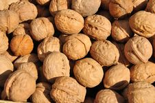 Free Walnuts Stock Images - 8507794