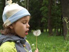 Free The Girl With Dandelion. Stock Image - 8508091