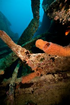 Free Sponges On The Thistlegorm Stock Photography - 8508212