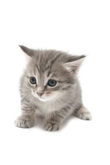 Free Small Gray Kitten Royalty Free Stock Images - 8508559