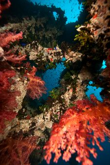 Free Coral On The Thistlegorm Stock Photo - 8508650