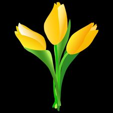 Free Yellow Tulips Royalty Free Stock Image - 8509786