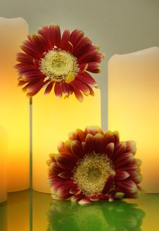 Free Gerbera Flowers And Lit Electric Candles On A Green Glass, Spa Style, Selective Focus Stock Images - 85067674