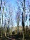 Free Woodland Path Stock Image - 8512791