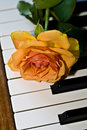 Free Orange Rose On The Piano Royalty Free Stock Images - 8513299