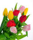 Free Bunch Of Tulips Royalty Free Stock Photography - 8518267