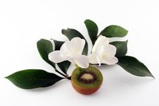 Free Flower And Kiwi Stock Photography - 8510332