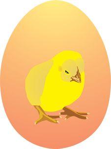 Free Yellow Chicken On Egg Stock Photo - 8510510