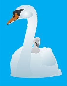 Free White Swan With A Baby Bird Royalty Free Stock Photo - 8510625