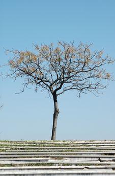 Free Lonely Tree Royalty Free Stock Photos - 8511028
