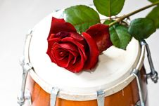 Red Rose On A Dhol Drum Stock Photos