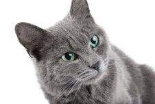 Free Grey Cat Stock Image - 8513291