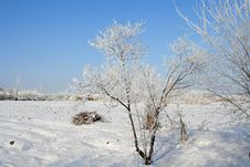 Free Winter Landscape Royalty Free Stock Photos - 8513448