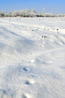 Free Winter Landscape Stock Image - 8513451