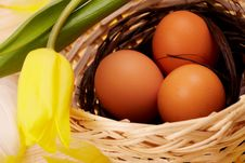 Free Eggs In Nest With Flower Royalty Free Stock Photos - 8513718