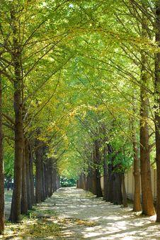 Free Gingko Road Stock Photography - 8515102