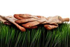Free Old Worn Workgloves On Green Grass Royalty Free Stock Photos - 8515108