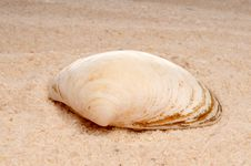 Free Closeup Of A Sea Shell On Sand Royalty Free Stock Images - 8515119