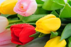 Free Bunch Of Tulips Stock Photography - 8518192