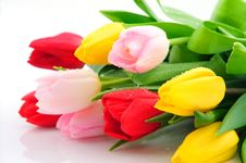 Free Bunch Of Colorful Tulips Isolated On White Royalty Free Stock Image - 8518196