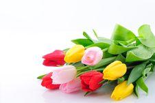 Free Bunch Of Tulips Stock Photo - 8518200