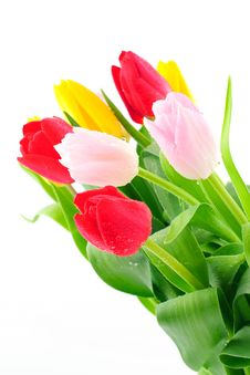 Free Bunch Of Tulips Royalty Free Stock Photography - 8518227