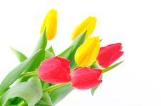 Free Bunch Of Tulips Stock Images - 8518244