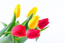 Free Bunch Of Tulips Stock Photos - 8518253