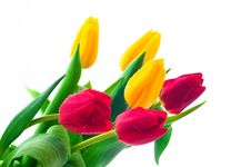 Free Bunch Of Tulips Stock Photography - 8518262