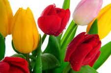 Free Bunch Of Tulips Royalty Free Stock Photos - 8518278