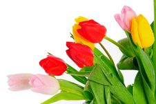 Free Bunch Of Tulips Stock Photography - 8518302