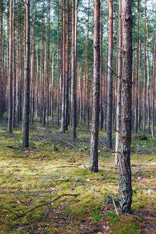 Free Trees Stock Photos - 8519683