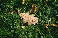 Free Autumn Leaf Royalty Free Stock Images - 85123499