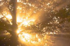 Free Good Morning Sun Royalty Free Stock Images - 85123649