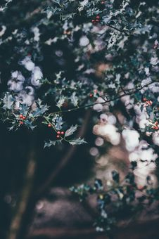 Free Close-up Of Flowers Growing On Tree Stock Photo - 85128860