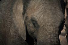 Free Close Up Of Elephant Stock Image - 85133421