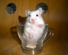 Free Add A Hammy To Your Coffee Stock Image - 85133851