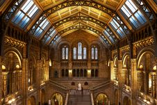 Free Natural History Museum In London Stock Images - 85134344