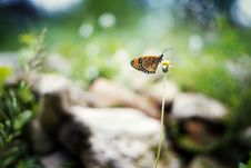 Free Butterfly Pollinating Flower Stock Photos - 85138183