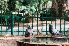 Free Doves On A Fountain Stock Image - 85152251