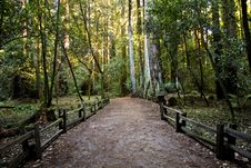 Free Fenced Path In Park Royalty Free Stock Photo - 85152285