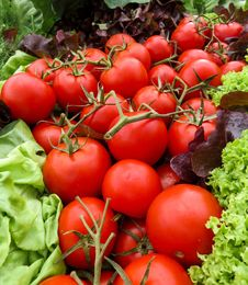 Free Tomatoes And Lettuce Stock Photos - 85153293