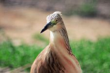 Free Portrait Of A Bird Stock Photography - 85156332