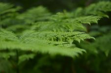 Free Green Fern Leaves Stock Images - 85156594