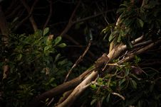 Free Bird Perched On Branch Stock Image - 85161721