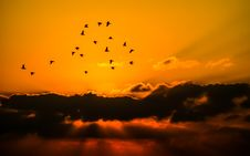Free Mass Of Bird Flying During Sunset Royalty Free Stock Photo - 85161775