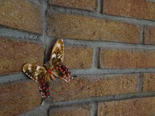 Free Butterfly On Brick Wall Royalty Free Stock Image - 85178576