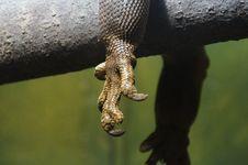 Free Lizard Paw Stock Photos - 85179023