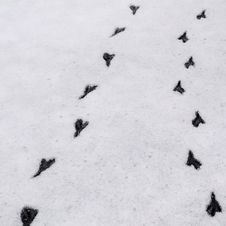 Free Bird Footprints In The Snow... Royalty Free Stock Photo - 85186265