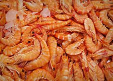 Free PUBLIC DOMAIN DEDICATION - Pixabay - Digionbew 12. 15-07-16 Giant Shrimp LOW RES PDSC06378 Royalty Free Stock Photo - 85189775